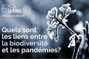 Coronavirus : « En réduisant la biodiversité, on augmente la probabilité qu'un virus passe d'une espèce à l'autre et atteigne les hommes »