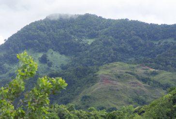 L'ONF et le CD organisent 4 randonnées découvertes le samedi 5 juin