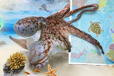 La 27ème édition du Festival de l'image sous-marine est lancée