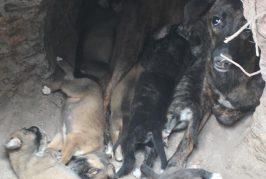 Un élevage clandestin de chiens découvert à la Convalescence